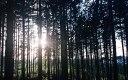 les u Ondřejova, Česká republika; Zuzka Kušičková, E